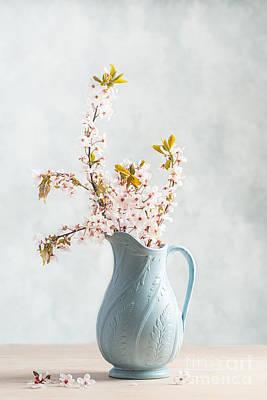 Element Photograph - Springtime Blossom by Amanda Elwell