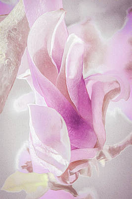 Springtime Magnolia Bloom Art Print