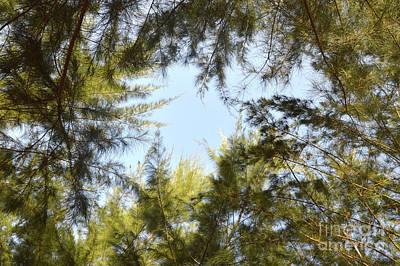 Priska Wettstein Land Shapes Series - Spruce by Antoni Halim