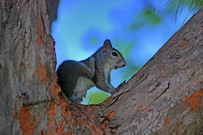 Photograph - 1- Squirrel by Joseph Keane