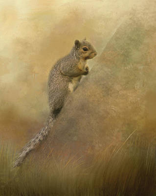Photograph - Cute Squirrel by Marilyn Wilson