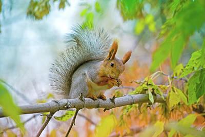 Chipmunk Photograph - Squirrel Washes On The Branch by Oksana Ariskina