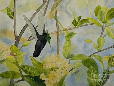 Painting - St. Lucian Hummingbird by Laurel Best