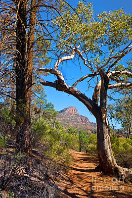 St Mary Photograph - St Mary Peak Wilpena Pound by Bill  Robinson