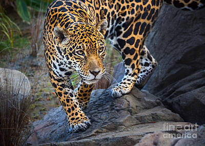 Strong America Photograph - Stalker by Jamie Pham
