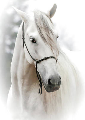 Photograph - Stallion Stud by Athena Mckinzie