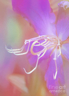 Photograph - Stamens by Judi Bagwell