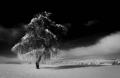 Photograph - Standing Tall In Winter by Andreas Dobeli