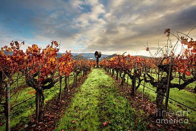 Sonoma Photograph - Standing Tall by Jon Neidert