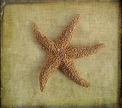 Photograph - Starfish by Cindi Ressler
