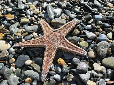 Photograph - Starfish On The Beach In Motril by Chani Demuijlder