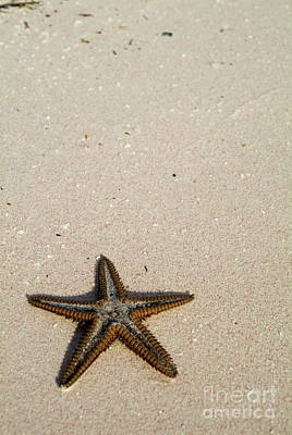 Starfish Partially Buried In White Sand Art Print by Sami Sarkis