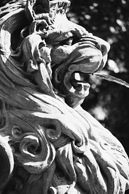 Photograph - Stately Lion by Alice Gipson