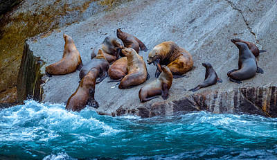 Photograph - Steller Sea Lions 2 by Brian Stevens