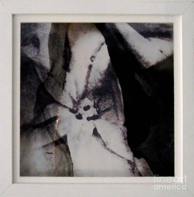 Photograph - Stone Flower by Lydie Dassonville
