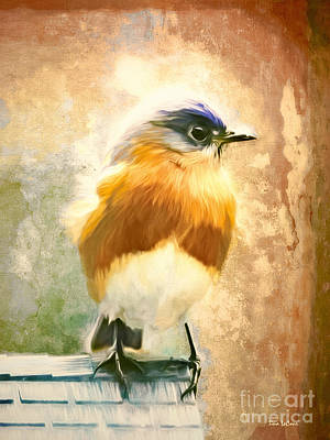 Strapping Bluebird Art Print by Tina LeCour