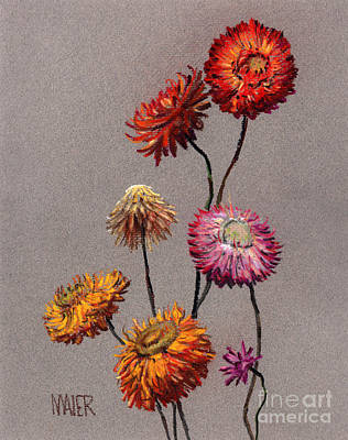 Still Life Drawing - Straw Flowers by Donald Maier