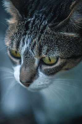 Domestic Pets Photograph - Stray Cat by Carlos Caetano