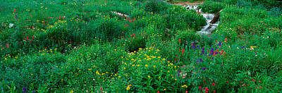 Ouray Photograph - Stream And Alpine Flowers, Ouray by Panoramic Images