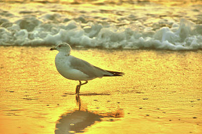 Photograph - Seagull Yoga by JAMART Photography
