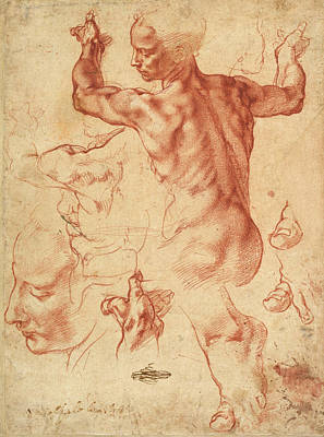 Classic Study Drawing - Studies For The Libyan Sibyl by Michelangelo Buonarroti