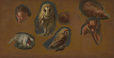 Painting - Studies Of A Fox, A Barn Owl, A Peahen, And The Head Of A Young Man by Jacques-Laurent Agasse