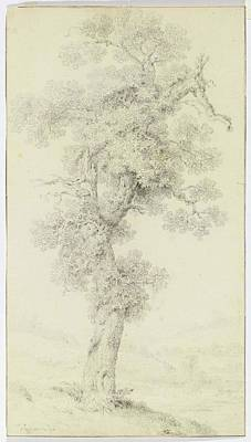 Balthasar Painting - Study Of An Old Tree by MotionAge Designs