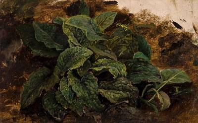 Middleton Painting - Study Of Leaves by John Middleton