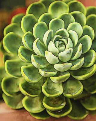 Photograph - Succulent by Jaki Miller
