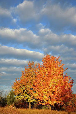 Photograph - Sugar Maple Sunrise by Ray Mathis
