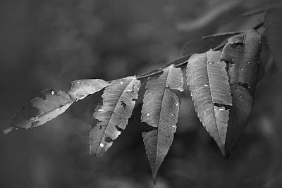 Photograph - Sumac by Jim Vance