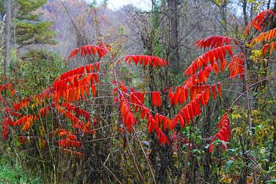 Photograph - Sumac by Kathryn Meyer