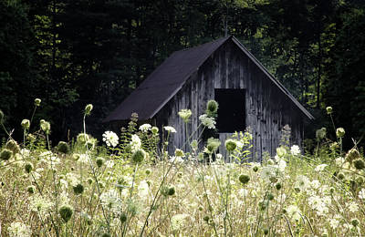 Wildflowers Photograph - Summer Barn by Rob Travis