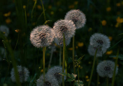 Photograph - Summer Breeze by Miguel Winterpacht