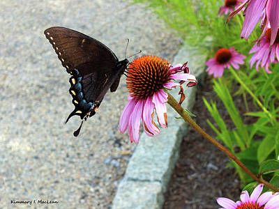 Photograph - Summer Butterfly by Kimmary I MacLean