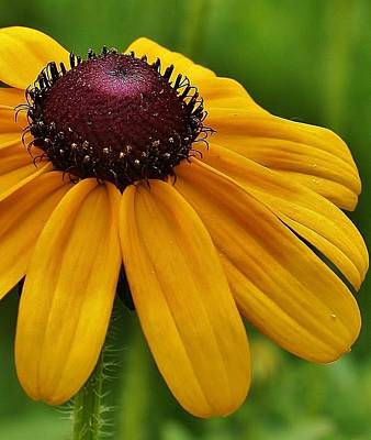 Photograph - Summer Delight by Bruce Bley