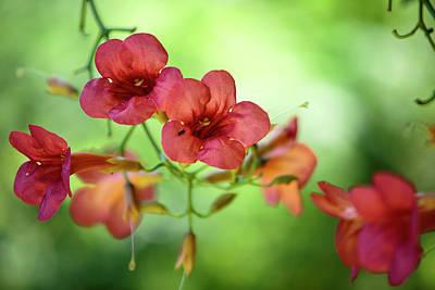Quiet Photograph - Summer Flowers by Nailia Schwarz
