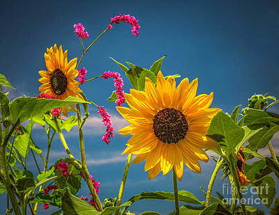 Photograph - Summer Flowers by Nick Zelinsky