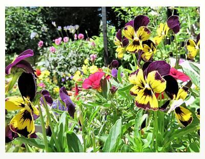 Photograph - Summer Garden by Nancy Pauling