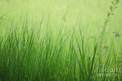 Photograph - Summer Grass by Dale Powell