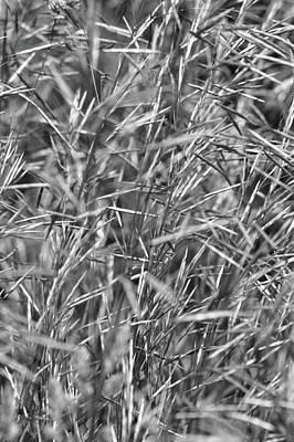 Photograph - Summer Grass by Tim Good