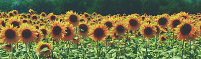 Photograph - Summer Sunflowers by Pixabay