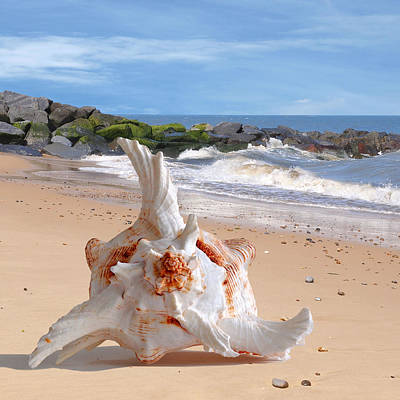 Photograph - Summer Tide - Murex Seashell Square by Gill Billington