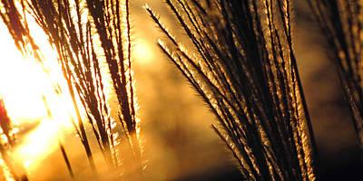 Sun Grass Wind Art Print by Amy Tyler