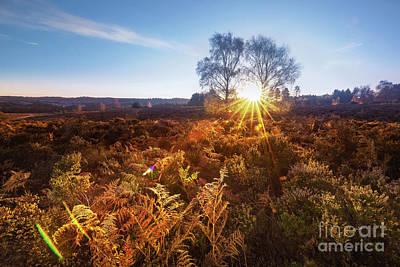 Autumn Landscape Mixed Media - Sun by Svetlana Sewell