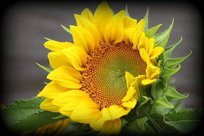 Sunflower Beauty Art Print