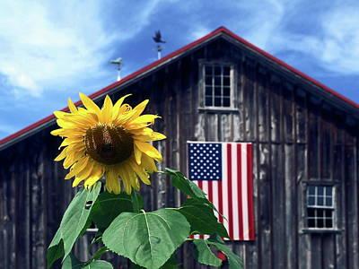 Sunflower By Barn Art Print
