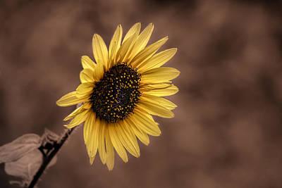 Sunflowers Photograph - Sunflower Vintage by Denise Pennington