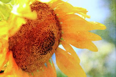Photograph - Sunflower Drops by Toni Hopper