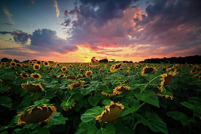 Photograph - Sunflower Field  by Emmanuel Panagiotakis